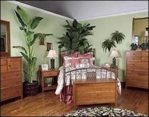 Cây cảnh trong phòng ngủ