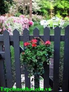 Những mẫu hàng rào đẹp