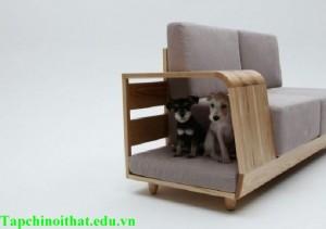 Nội thất cho người nuôi thú cưng