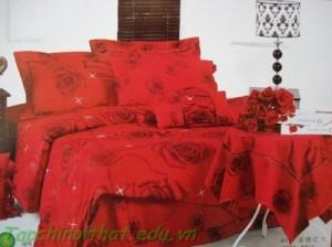 Tràn đầy màu sắc hoa hồng