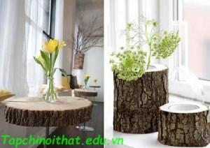 Những khoanh gỗ tròn