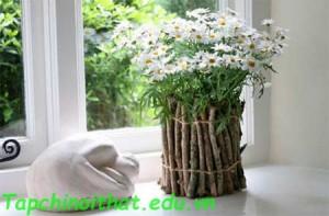 Cành cây bao quanh chậu hoa