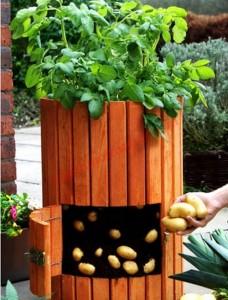 Tự trồng rau củ theo phong cách của riêng mình!