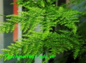 Trang-tri-nha-chuan-cho-nguoi-menh-12