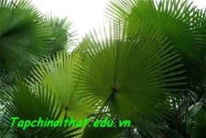 Trang-tri-nha-chuan-cho-nguoi-menh-16