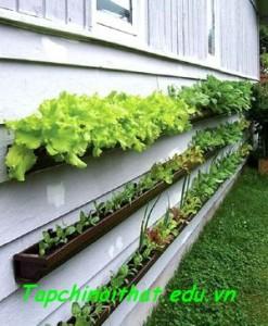 Giải pháp trồng rau sạch cho nhà chật