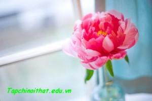 6 loài hoa phú quý, tốt lành cho nhà đẹp